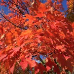 Autumn/Fall Colors 2015