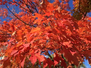 fall colors 2015