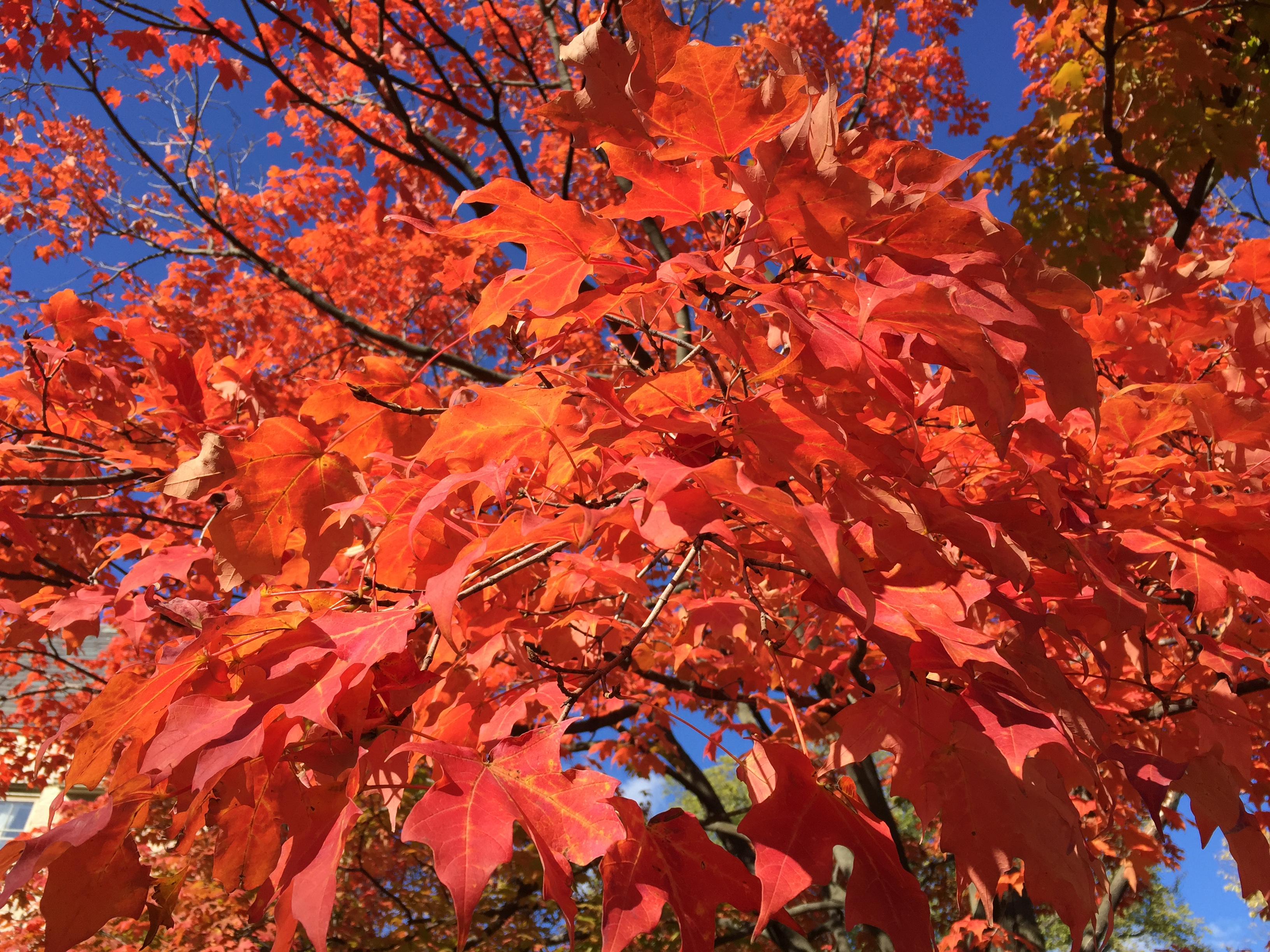 Autumn/Fall Colors 2015 – Love is the most excellent way